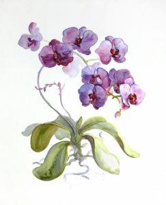 Картини графіка Маджентова орхідея