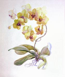 Картини графіка Орхідея тепла