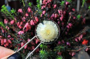 Белая брошь Булавка на лацкан или для кардигана с хризантемой