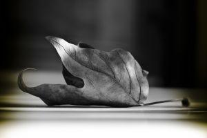 Фотокартины Опавший листок с дерева