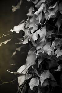 Фотокартины Листья №2