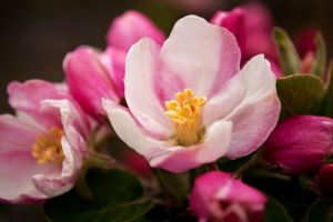 Повалинская Моника Весна