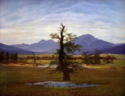 Одинокое дерево - изображение 1