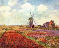 Тюльпани Голландії