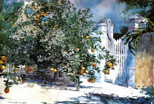 Апельсиновые деревья и ворота