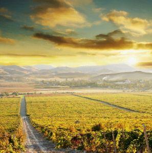 Фотокартины для интерьера Виноградники