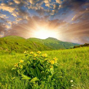 Фотокартини Карпатський пейзаж