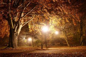 Фотокартины для интерьера Ночной парк