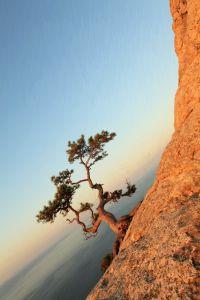 Фотокартины для интерьера Одинокое дерево