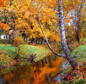 Фотокартины для интерьера Осень