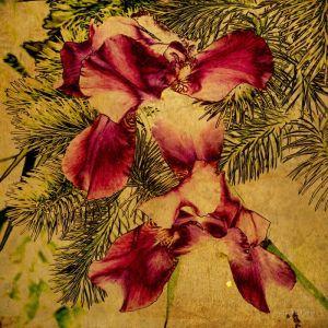 Фотокартины для интерьера Цветы