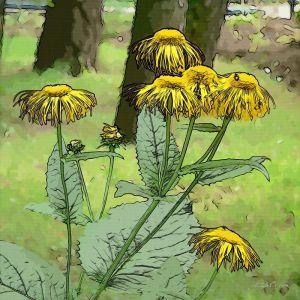 Фотокартини Мальовані квіти
