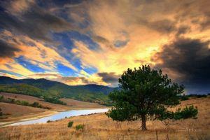 Фотокартини Одиноке дерево