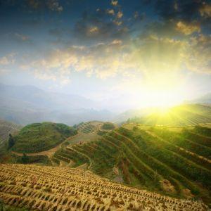 Фотокартины для интерьера Рисовые поля
