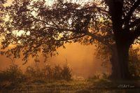 Одинокий дуб