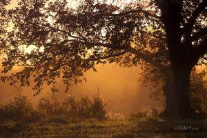 Фотокартини Самотній дуб