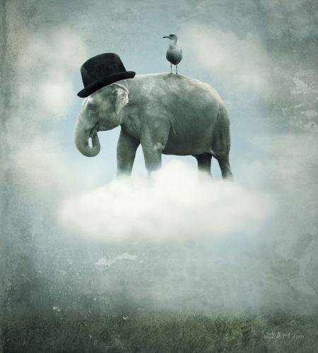Слон - изображение 1