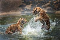 Забава диких звірів