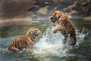 Забава диких зверей