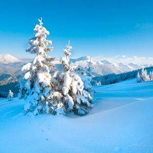 Фотокартины для интерьера Зимняя сказка