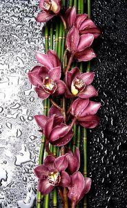 Фотокартини Квіткова композиція