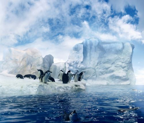 Пари пінгвінів