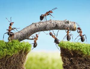 Печатные картины на холсте Работники - муравьи
