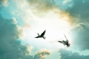 Фотокартины для интерьера Птицы в небе