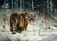 Тигр зимою