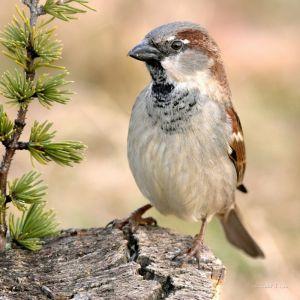 Фотокартини Пташка