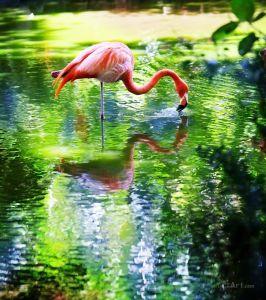 Фотокартини Рожевий фламінго