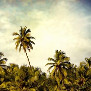 Остров и пальмы