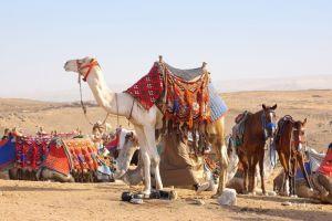 Фотокартины для интерьера В пустыне