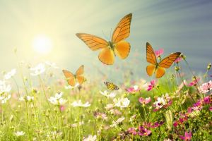 Фотокартины для интерьера Бабочки