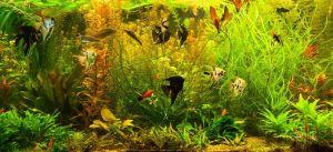 Фотокартины для интерьера В аквариуме