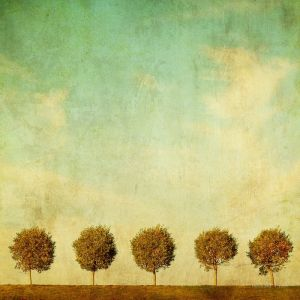Фотокартини Дерева