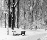 В зимовому парку