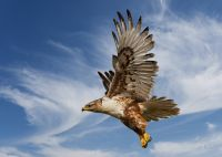 Велика птаха