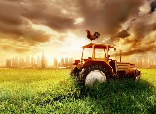 Трактор и петух