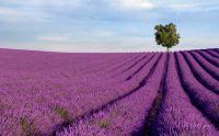 Фиолетовый пейзаж