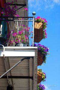 Новый Орлеан. цветы
