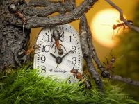 Муравьи и часы