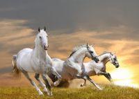 Лошади галопом