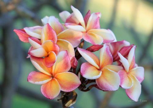 Цветы весны - изображение 1