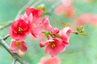Цветы весной