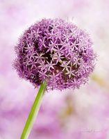 Фіолетова квітка