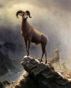 Скалистые горные бараны