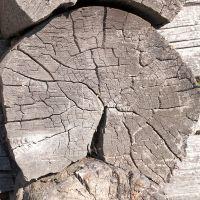 Деревянный срез