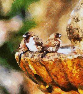 Ванна для птиц