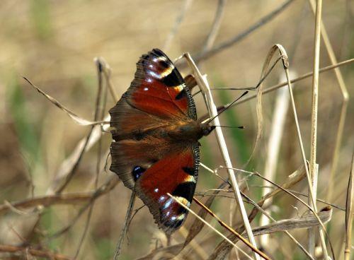 Бабочка - изображение 1
